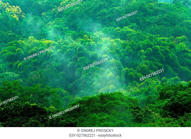 Tropic forest during rainy day