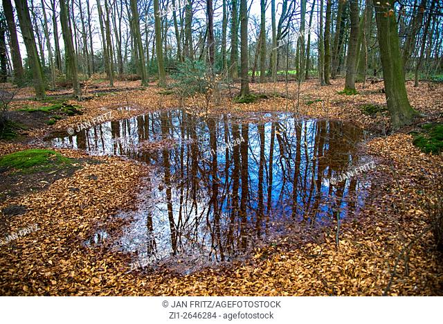 a rainpool in the forest after rain at fall in the eastern part of Holland near the german border, the Achterhoek