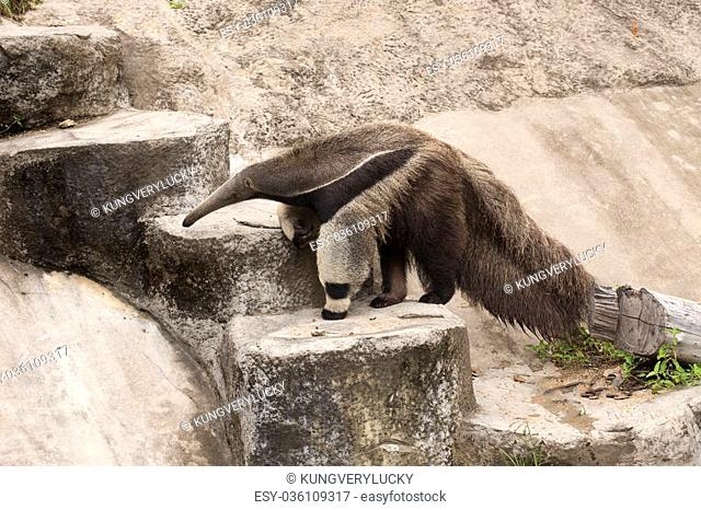 giant ant eater walking to up stair