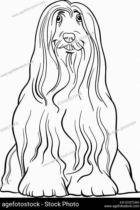 bearded collie dog cartoon for coloring
