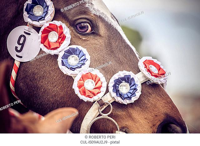 Horse decorated with horse show rosettes