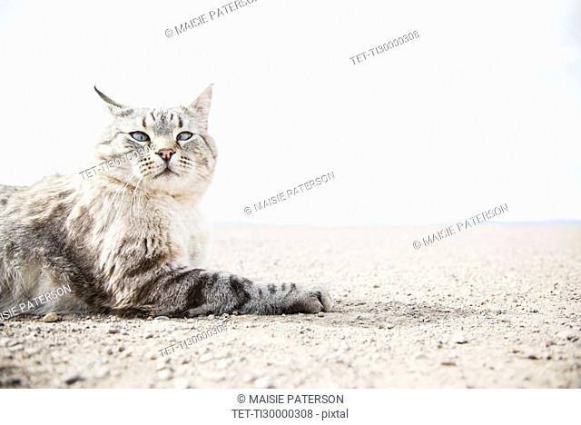 Cat resting on ground