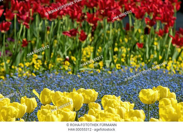 Bayern, Oberbayern, Berchtesgadener Land, Blume, Blumen, Bluete, Blüte, Blueten, Blüten, rot, rote Blüte, rote Bluete, gelb, gelbe Blüte, gelbe Bluete, Garten