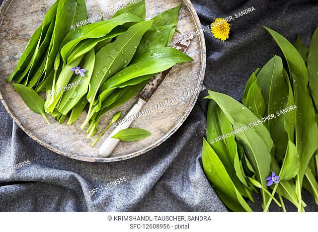 Fresh ramsons (wild garlic)