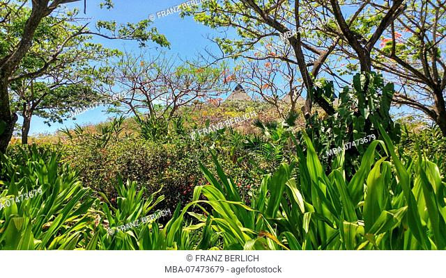 Top of a house behind plants, bushes, cactuses, shrubs, trees, Fiji