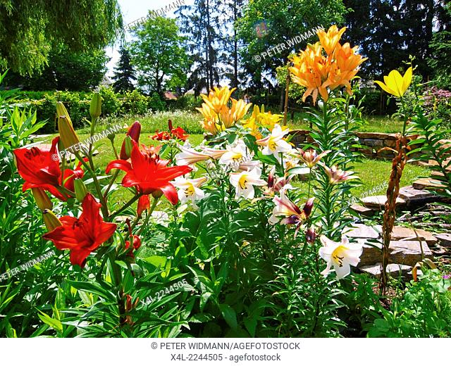 garden in early summer, Austria, Lower Austria, Southern Lower Austria, Eggendorf