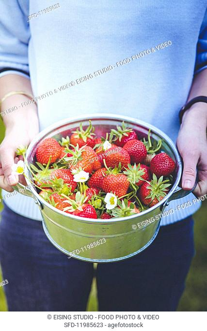 A woman holding a bucket of freshly picked strawberries