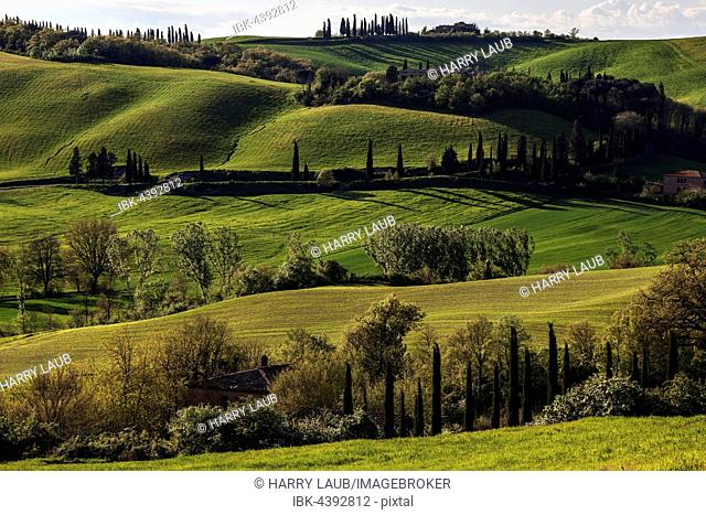 Tuscan hilly countryside with cypresses, near Montenori, Tuscany, Italy