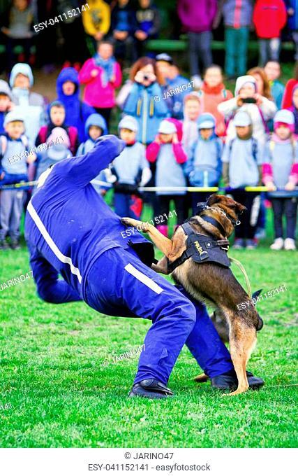RUZOMBEROK, SLOVAKIA - SEPTEMBER 9: FDemonstration of police dog training on September 9, 2017 in Ruzomberok