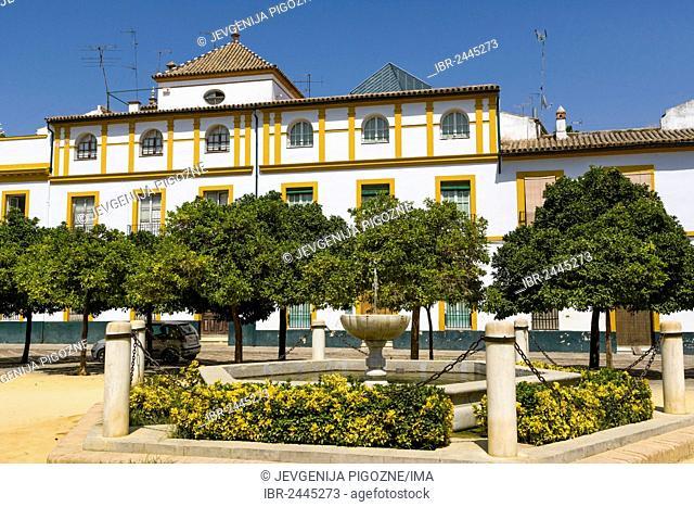 Plaza Patio de Banderas, The Barrio de Santa Cruz, Seville, Sevilla, Andalusia, Spain, Europe