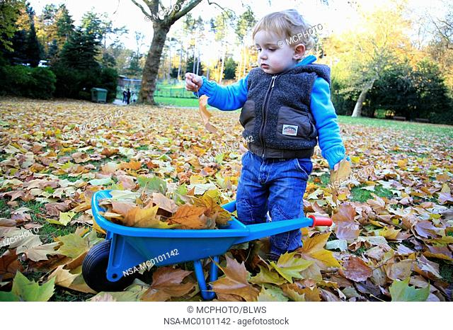 little boy filling a barrow with leaves