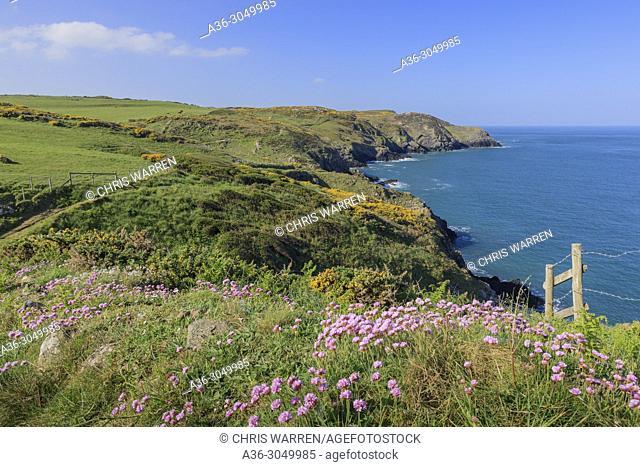 Penbwchdy Strumble Head Fishguard Pembrokeshire Wales