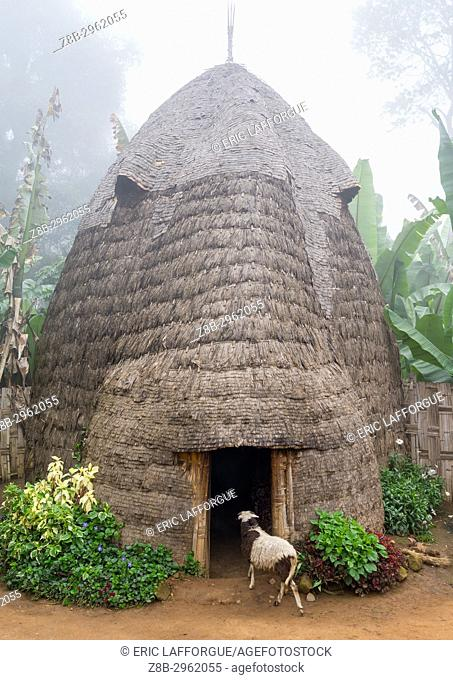Traditional Dorze house made of bamboo and enset leaves, Gamo Gofa Zone, Gamole, Ethiopia