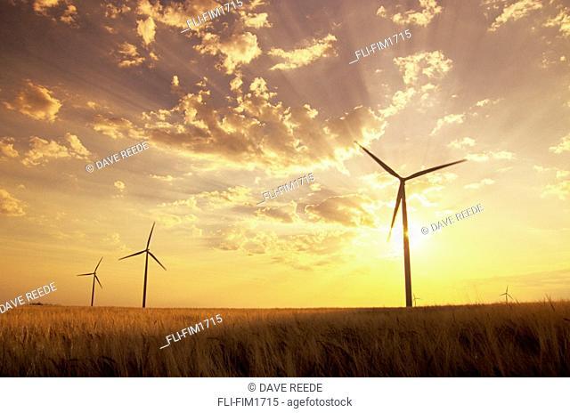 Wind Turbines in Barley Field at Sunset, near St. Leon, Manitoba