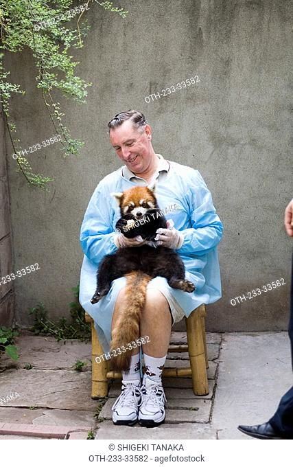A tourist holding a lesser panda posing for photograph at Chengdu Panda breeding and research center, Sichuan, China