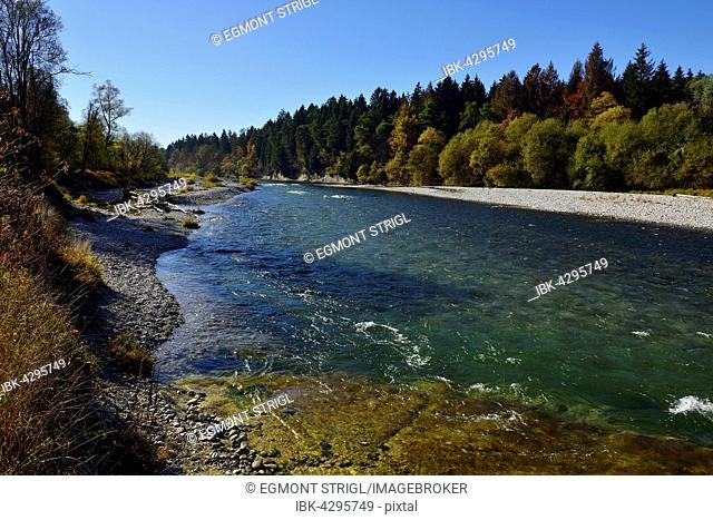 Isar river between Ascholding and Geretsried, autumn, Bavaria, Germany