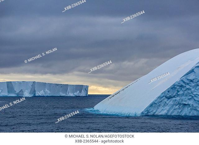 Tabular icebergs in the Weddell Sea off Brown Bluff, Tabarin Peninsula, Antarctica