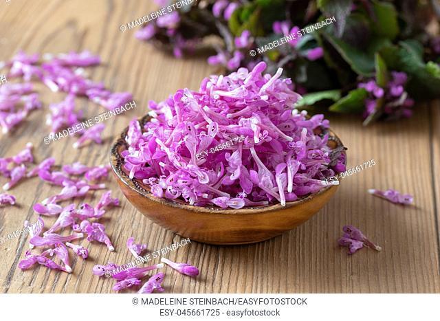 Fresh purple dead-nettle flowers in a bowl on a table