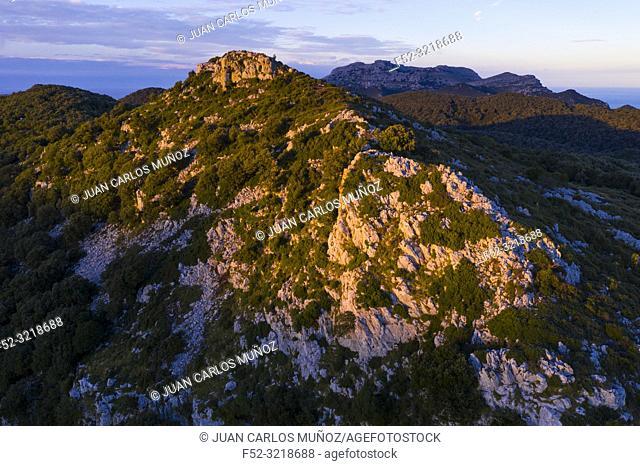 Holm Oak forest, Liendo, Liendo Valley, Montaña Oriental Costera, Cantabrian Sea, Cantabria, Spain, Europe