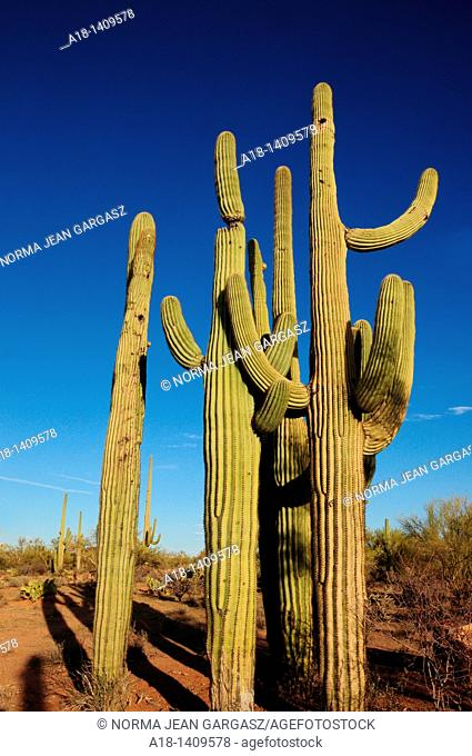 Ironwood Forest National Monument is northwest of Tucson, Arizona, in the Sonoran Desert, USA