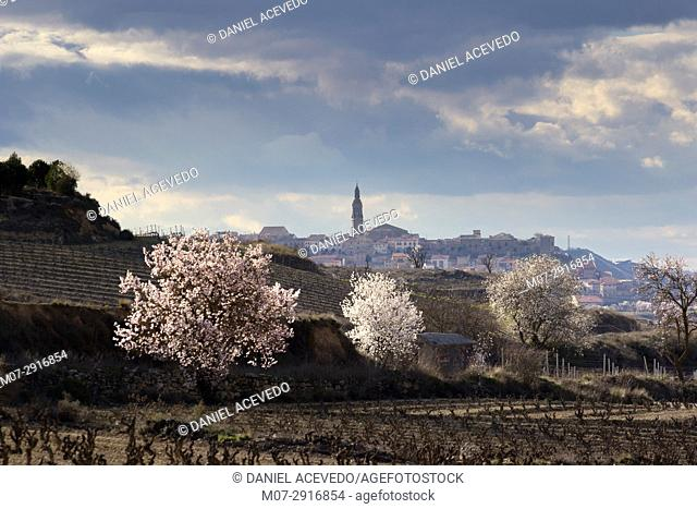 Briones wine scape in spring time, La Rioja wine region, Spain, Europe