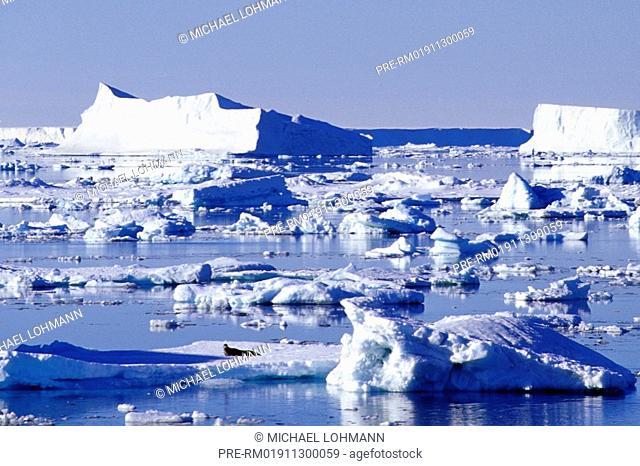 Ice floes, Iceberg, seal