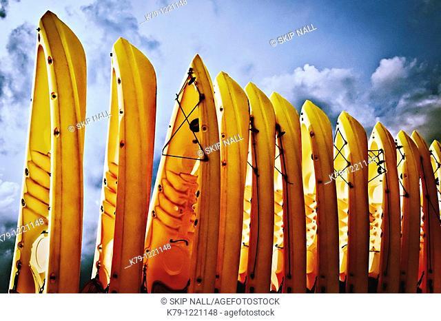 Row of kayaks at the beach