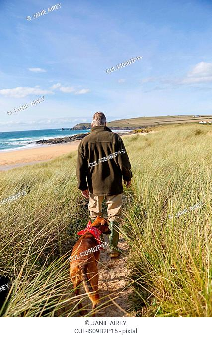 Man walking pet dog on sand dunes, Constantine Bay, Cornwall, UK