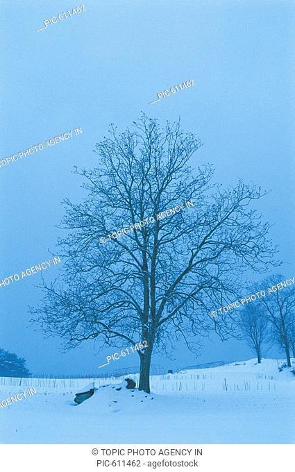 Trees in Winter,Korea