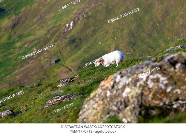 Meeting on The Snowdon Horseshoe, Snowdonia National Park, Gwynedd, Wales, UK, Europe