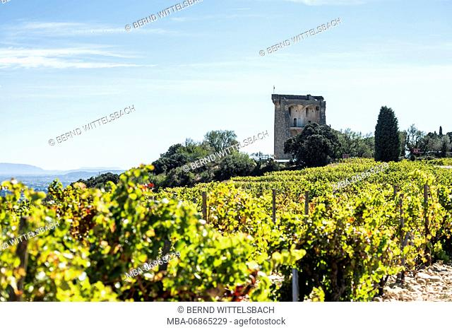 Châteauneuf-du-Pape, Vaucluse, Provence-Alpes-Côte d'Azur, Provence, France, view of Châteauneuf-du-Pape Castle and the famous vineyards in the Rhone Valley