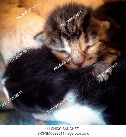 Kittens in Prado del Rey, Sierra de Cadiz, Andalusia, Spain