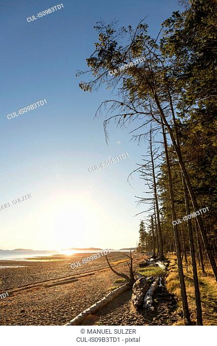 Beach and forest at sunrise, Rathrevor Beach Provincial Park, Vancouver Island, British Columbia, Canada