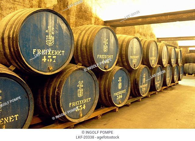 Barrels in the wine cellar, Freixenet, Cava Cellar, Sant Sadurni d'Anola, Catalonia, Spain