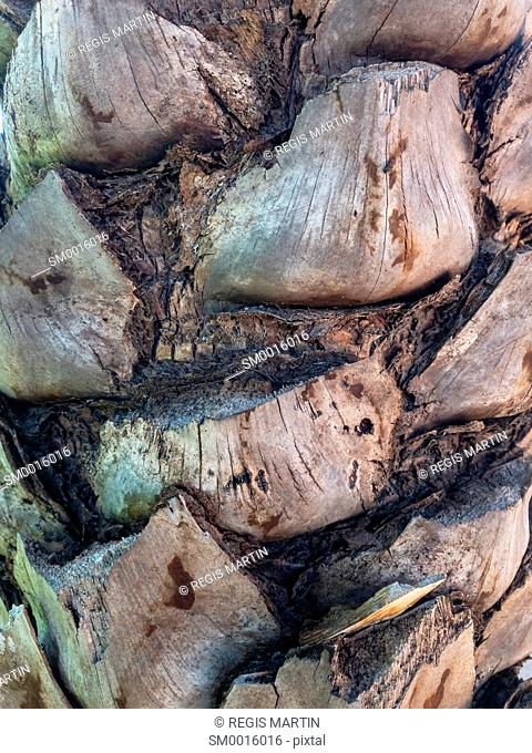 Closeup of a palm tree trunk