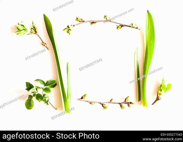 Spring greenery plants over white background. Flat lay forest and nature concept