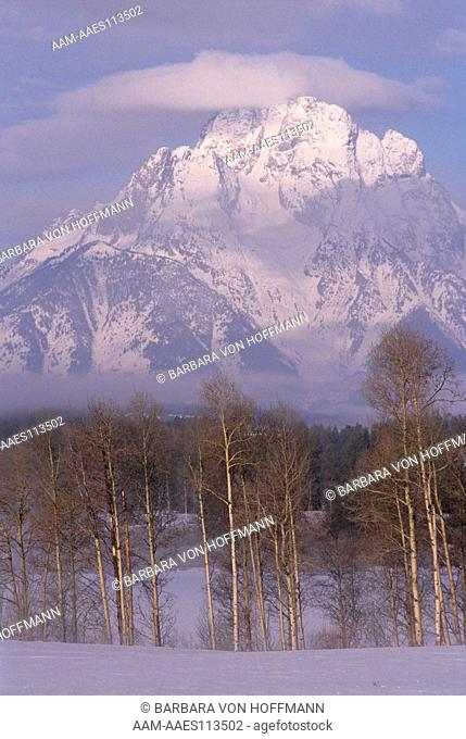 Scenic of Mt. Moran in Winter, Aspens in frgrd., Grand Teton N.P., WY