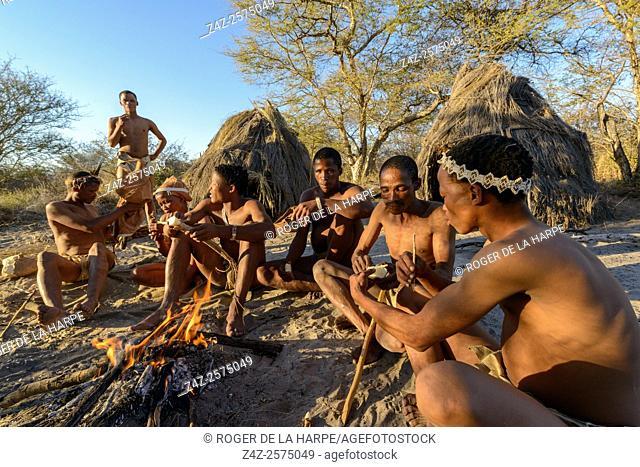San or Bushman people eating a root (bulb) tha contains a high percentage of water. Haina Kalahari Lodge. Botswana