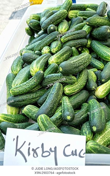 New York City, Manhattan. Freshly Picked Kirby Cucumbers Piled into a Plastic Bin. Displayed and Offered for Sale at an Outdoor Market