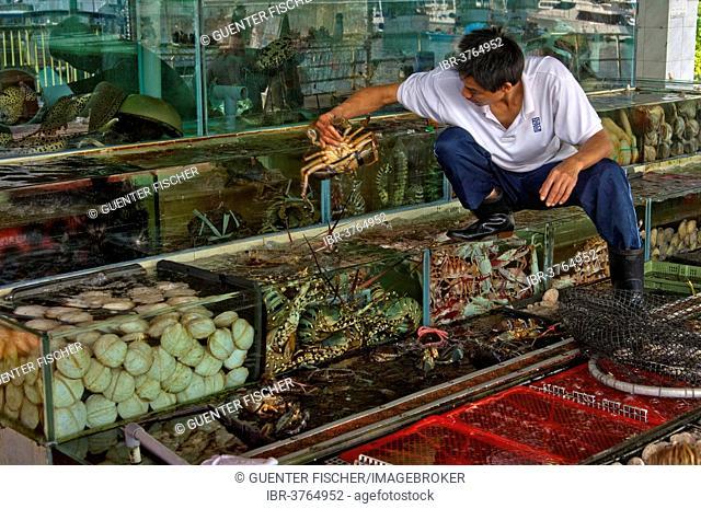 Employees of a fish restaurant controlling basins with live marine animals, Sai Kung, Hong Kong, China