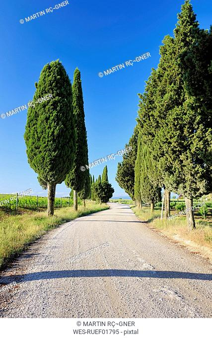 Italy, Siena, Val d'Orcia, Dirt road lined with cypress trees, Cupressus sempervirens