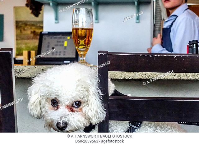 STOCKHOLM, SWEDEN Puppy has an after work beer!