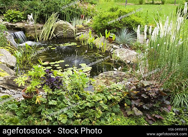 Nymphaea - Waterlily pads, Acorus calamus 'Variegatus, Sagittaria latifolia 'Duck potato' - Arrowhead in rock edged pond with waterfall and bordered by Geum...