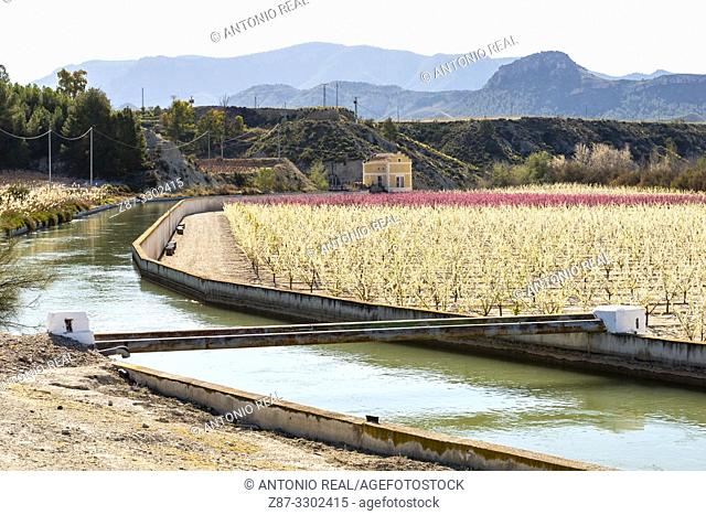 Irrigation channel and blooming plum field. Cieza. Murcia. Spain