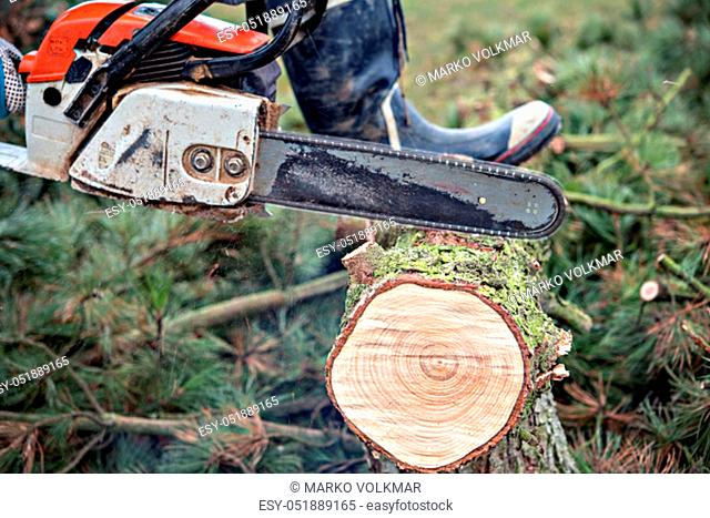lumberman with worn chainsaw cutting wood