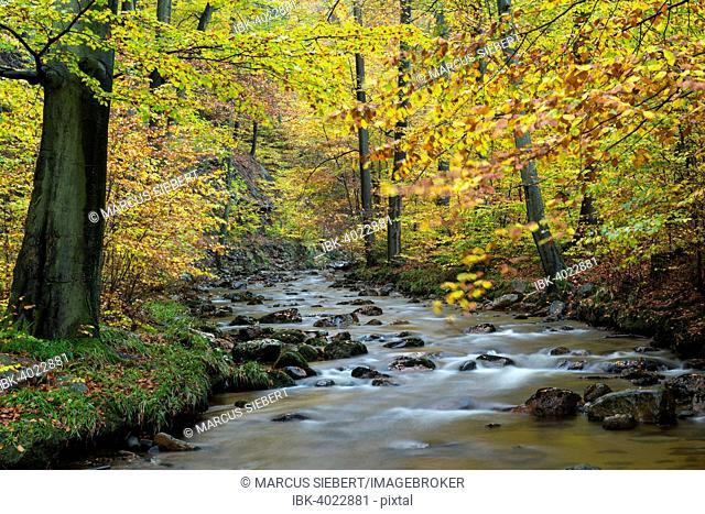 Ilse stream, autumn, Harz National Park, Ilsenburg, Saxony-Anhalt, Germany