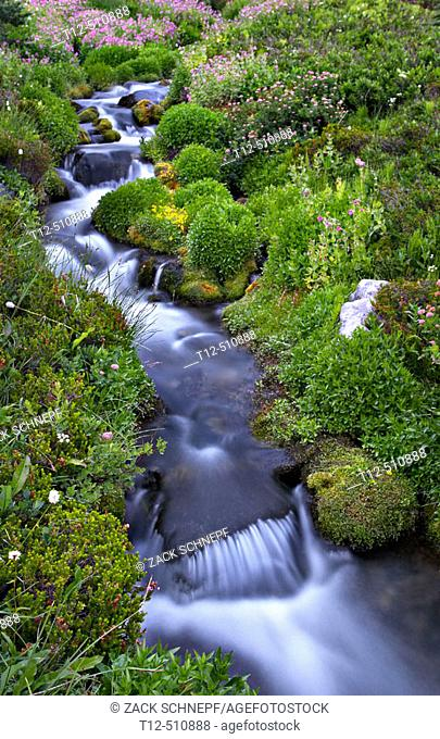 A stream and summer flowers on Mount Rainier