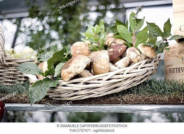 Basket of porcini mushrooms, boletus