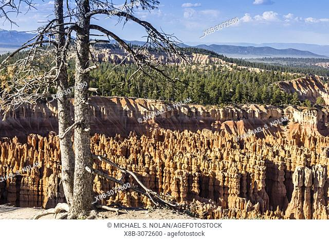 View of hoodoo formations from the Navajo Loop Trail in Bryce Canyon National Park, Utah, USA