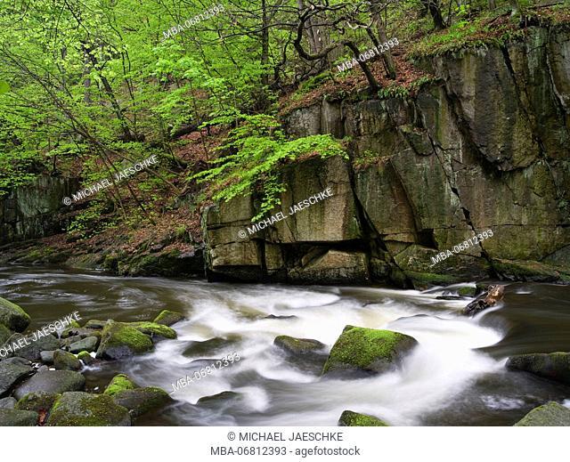 Bode in the spring, Harz National Park, Saxony-Anhalt, Germany